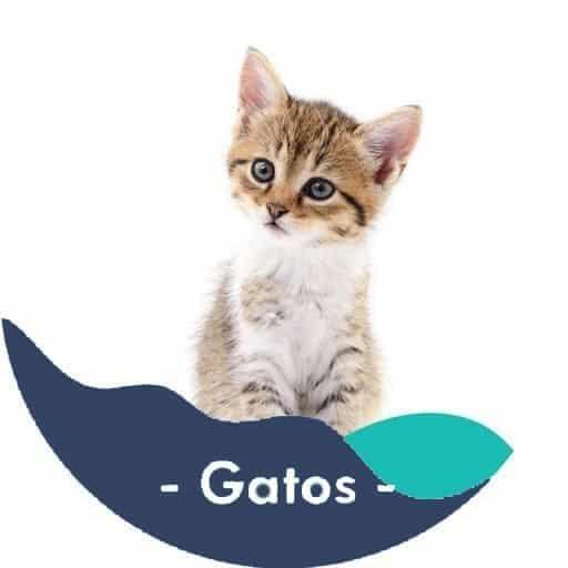 Gatos-categoria2