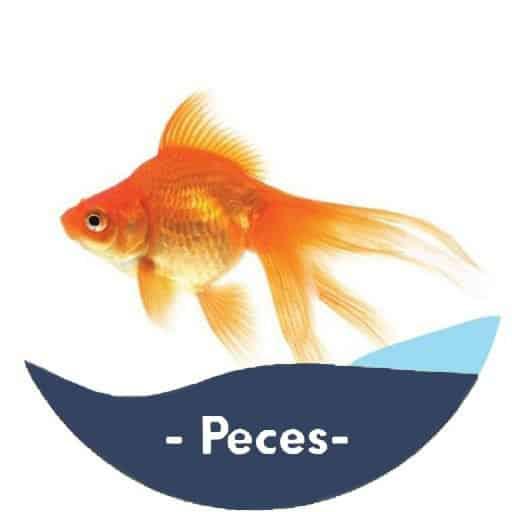 peces-categoria2