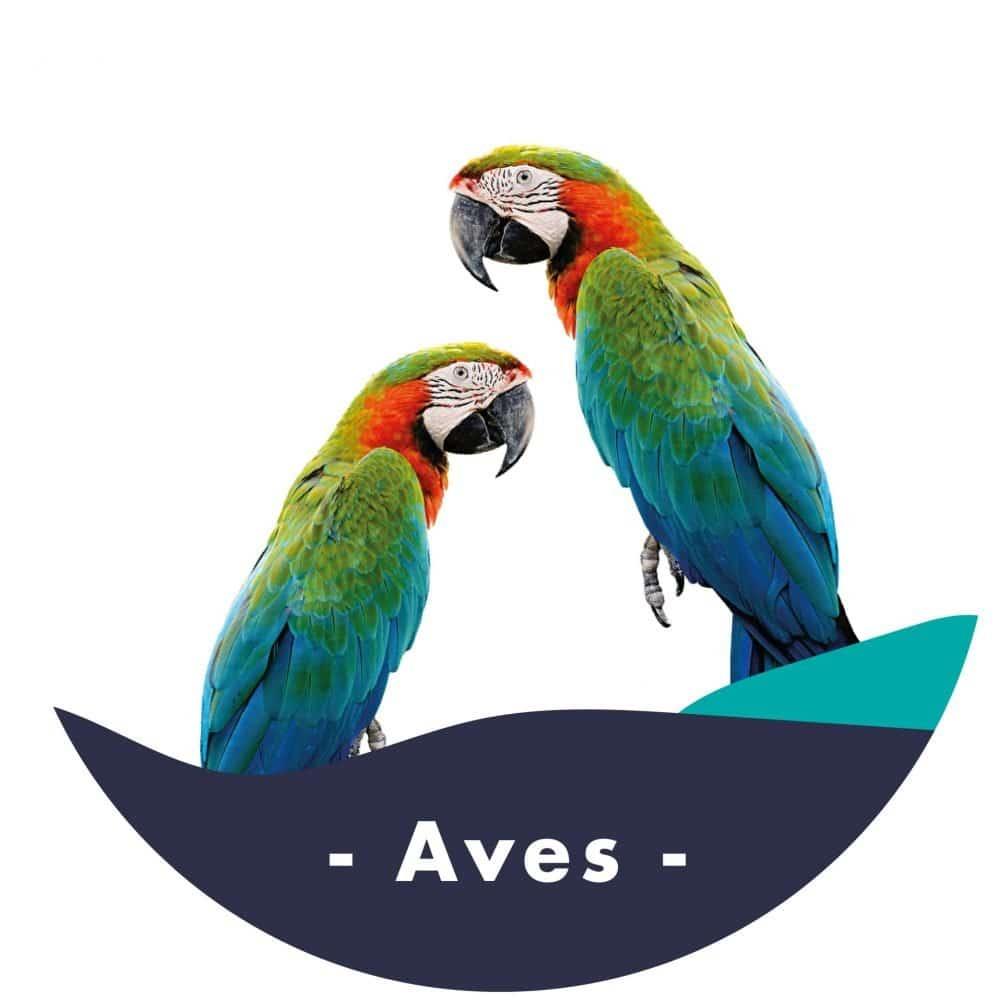 Aves-01